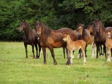 Picture of a Group of Mares