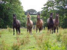 Some of our mares 2016